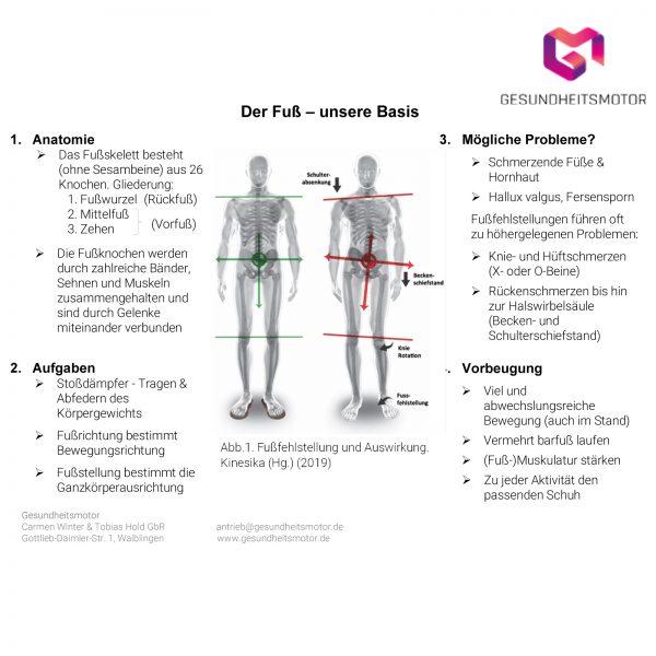 Fuß als Stabilisator unseres Körpers